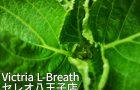 Victria L-Breath八王子店無料体験会のお知らせ